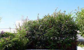 דירת גג – דופלקס ענק מהמם במרכז רעננה